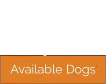 looking to adopt a dachshund